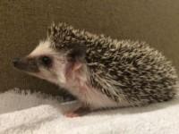 Meet the Sharpest Pet Around